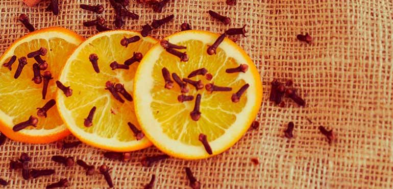 Remedios caseros y económicos contra insectos
